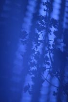 PHOTO OMBRE BLEU MAJORELLE